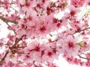 Фотообои на стену: Цветы 16