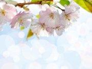 Фотообои на стену: Цветы 17