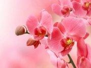 Фотообои на стену: Цветы 18