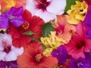 Фотообои на стену: Цветы 23