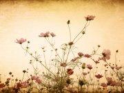 Фотообои на стену: Цветы 24