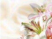 Фотообои на стену: Цветы 8
