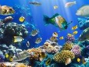 Фотообои на стену: Подводный мир 3