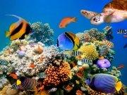 Фотообои на стену: Подводный мир 5