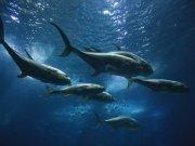 Фотообои на стену: Подводный мир 10