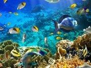 Фотообои на стену: Подводный мир 13