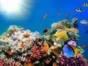 Фотообои на стену: Подводный мир 16