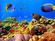 Фотообои на стену: Подводный мир 17