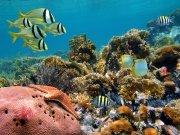 Фотообои на стену: Подводный мир 18