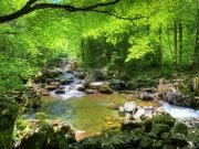 Фотообои на стену: Природа 1