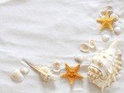 моря и океаны (38)