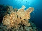 Фотопечать на потолке: Подводный мир (102)