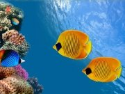 Фотопечать на потолке: Подводный мир (108)