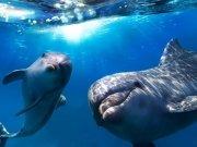 Фотопечать на потолке: Подводный мир (113)