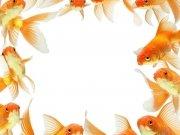 Фотопечать на потолке: Подводный мир (118)