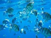 Фотопечать на потолке: Подводный мир (122)