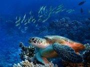 Фотопечать на потолке: Подводный мир (125)