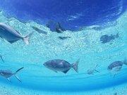 Фотопечать на потолке: Подводный мир (141)