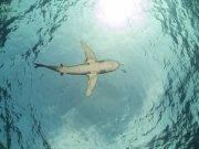 Фотопечать на потолке: Подводный мир (96)