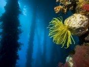 Фотопечать на потолке: Подводный мир 11