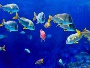 Фотопечать на потолке: Подводный мир 16