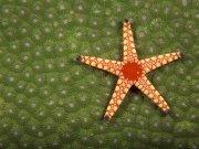 Фотопечать на потолке: Подводный мир 18