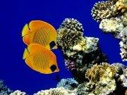 Фотопечать на потолке: Подводный мир 22