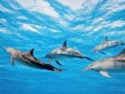 Фотопечать на потолке: Подводный мир 29