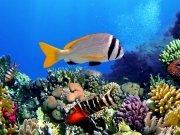 Фотопечать на потолке: Подводный мир 34