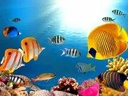 Фотопечать на потолке: Подводный мир 35