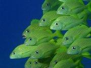 Фотопечать на потолке: Подводный мир 36