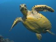 Фотопечать на потолке: Подводный мир 37