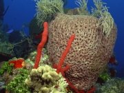 Фотопечать на потолке: Подводный мир 41