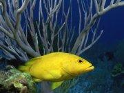 Фотопечать на потолке: Подводный мир 45