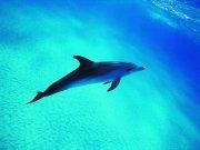 Фотопечать на потолке: Подводный мир 48
