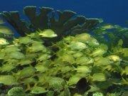 Фотопечать на потолке: Подводный мир 53