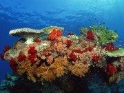 Фотопечать на потолке: Подводный мир 56