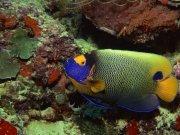 Фотопечать на потолке: Подводный мир 57