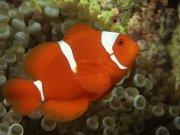 Фотопечать на потолке: Подводный мир 61