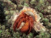Фотопечать на потолке: Подводный мир 66