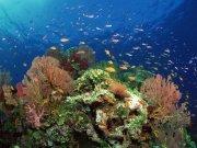 Фотопечать на потолке: Подводный мир 67
