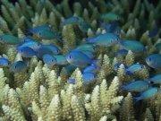 Фотопечать на потолке: Подводный мир 68
