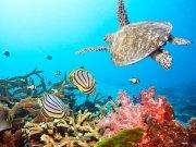 Фотопечать на потолке: Подводный мир 7