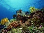 Фотопечать на потолке: Подводный мир 71