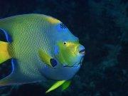 Фотопечать на потолке: Подводный мир 73
