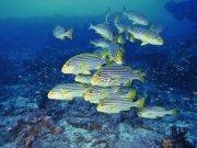 Фотопечать на потолке: Подводный мир 74
