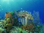 Фотопечать на потолке: Подводный мир 77