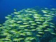 Фотопечать на потолке: Подводный мир 78