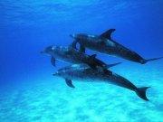 Фотопечать на потолке: Подводный мир 8