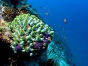 Фотопечать на потолке: Подводный мир 9